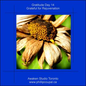 Days of Gratitude at the Awaken Studio Toronto http://www.awakenstudiotoronto.com