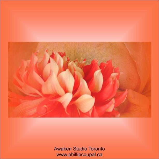 Gratitude Day 55 at the Awaken Studio Toronto http://www.awakenstudiotoronto.com
